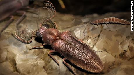 The Cretophengodes beetle roamed the tropical forests of Southeast Asia nearly 100 million years ago during the Cretaceous period.