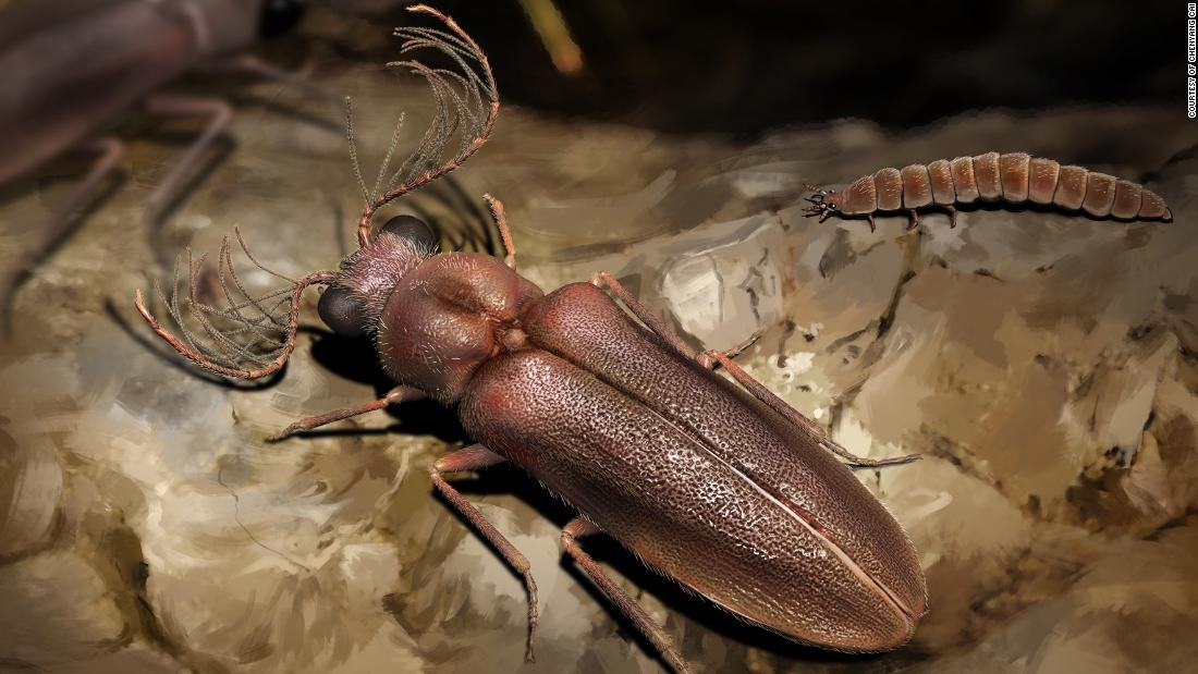 A 99-million-year-old beetle shines light on the evolution of glowing insects - CNN