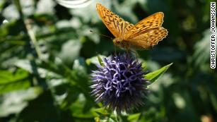 Scientists have finally worked out how butterflies fly
