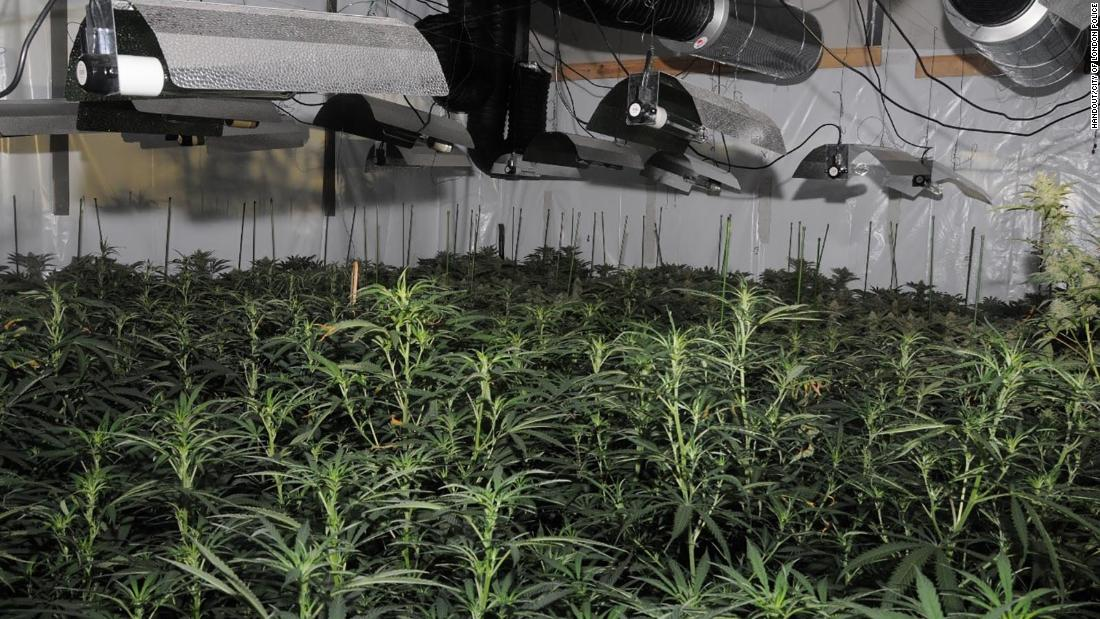 'Significant' cannabis factory found near the Bank of England