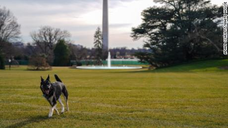 The first dogs Champ and Major moved into the White House on Sunday