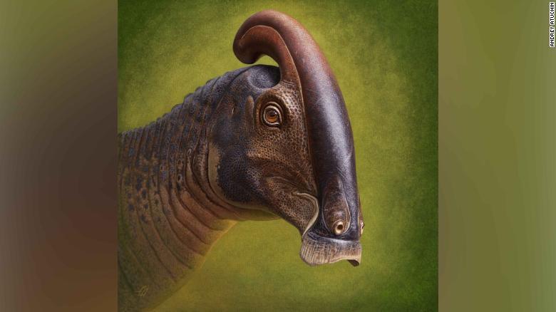Fossilized skull reveals how crested dinosaur got its fancy headgear