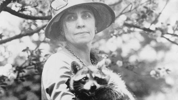 First lady Grace Coolidge holds her pet raccoon, Rebecca. Rebecca was sent to the Coolidges as a gift to cook on Thanksgiving -- yes, you read that right -- but the first family decided to adopt the animal instead.
