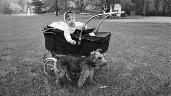 John F. Kennedy Jr. mischievously leans out of his baby carriage and reaches for the family's Welsh terrier, Charlie. Charlie was one of the Kennedy family's many dogs.