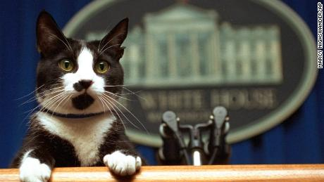 FILE- In this March 19, 1994 file photo, President Bill Clinton's cat Socks peers over the podium in the White House briefing room in Washington. Pets are back at the White House. President Joe Biden's German shepherds Champ and Major moved in over the weekend. They are the first dogs to live at the executive mansion since the Obama administration. Biden and his wife, Jill, adopted Major in 2018 from the Delaware Humane Association. They got Champ after the 2008 election.  (AP Photo/Marcy Nighswander, File)