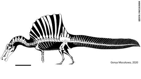 El material de Spinosaurus se ha recuperado en los actuales Egipto y Marruecos.