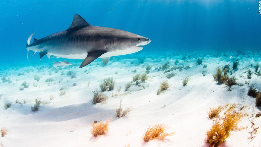 Florida led the world in shark attacks again in 2020