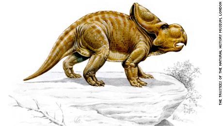 Estos dinosaurios pueden haber usado sus adornos para coquetear