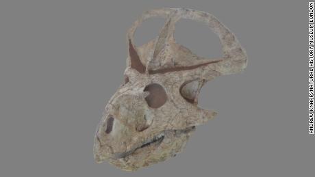 Analiza 3D a 30 de cranii complete ale Protoceratops a fost cel mai mare set de date 3D vreodată pentru un singur dinozaur.