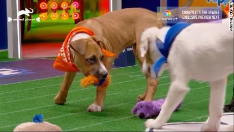 Puppy Bowl XVII: Team Ruff wins in a wonderful last-minute comeback