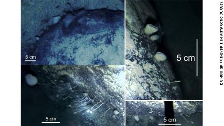 Shown are the stationary animals inhabiting the boulder's surface that were discovered by scientists.