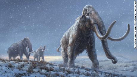 Nejstarší sekvence DNA na světě byla převzata z mamuta, který žil před více než milionem let
