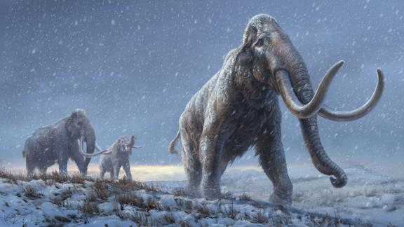 The illustration represents a reconstruction of the steppe mammoths that preceded the woolly mammoth, based on the genetic knowledge we now have from the Adycha mammoth. Illustration: Beth Zaiken/Centre for Palaeogenetics