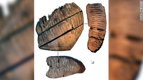 Sampes of the mammoth teeth, two of which were found to be more than a million years old.