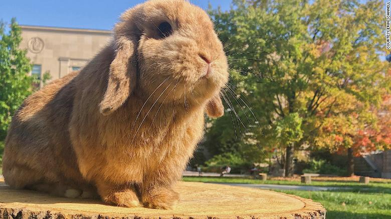 Meet the bunnies who helped people survive 2020