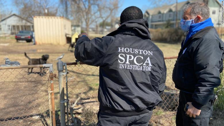 Animal cruelty cases are surging in freezing Texas