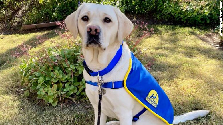 Beloved canine moves on after helping hospital staff through a year of the pandemic