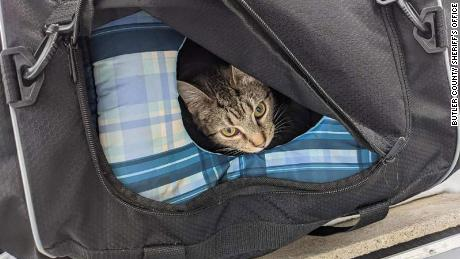 स्प्रिंकल उस बैग से बाहर दिखता है जिसमें वह और उसके बिल्ली के बच्चे पाए गए थे।
