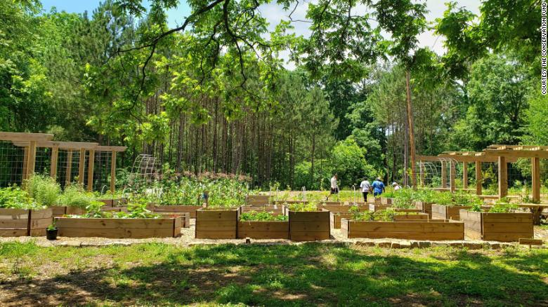 Atlanta creates the nation's largest free food forest with hopes of addressing food insecurity