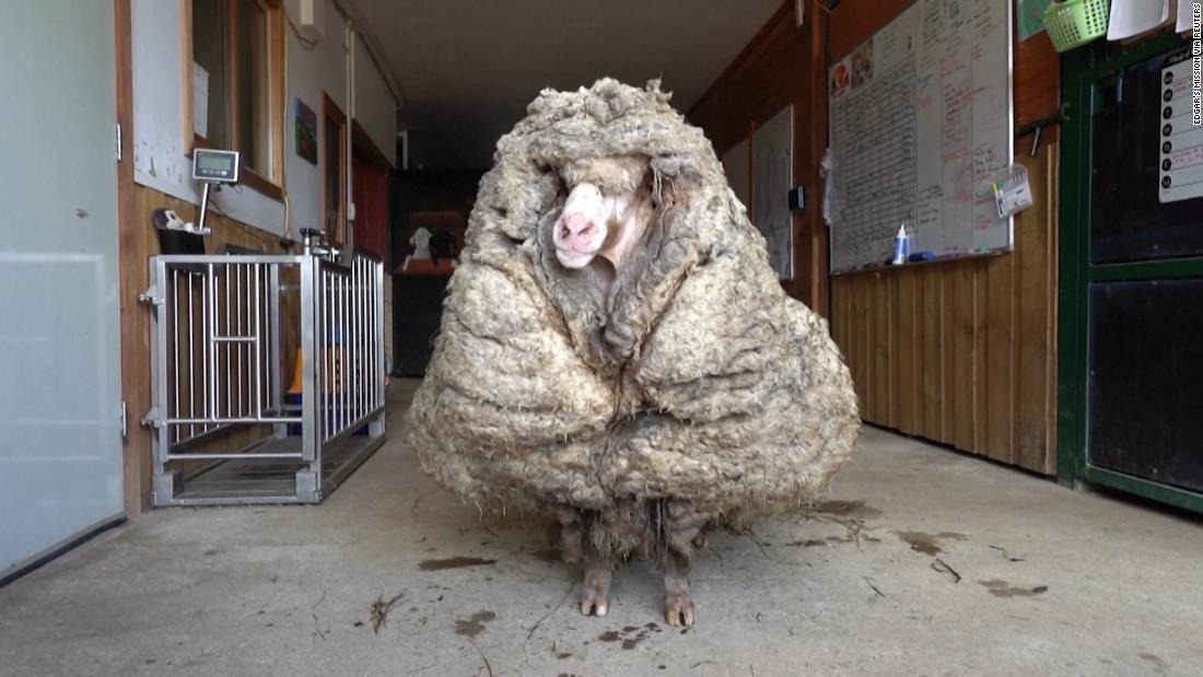 Baarack got a haircut after years of wandering the Australian bushland
