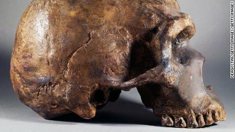 Sebuah studi baru menemukan bahwa Neanderthal dapat mendengar dan mengeluarkan suara yang sama seperti manusia