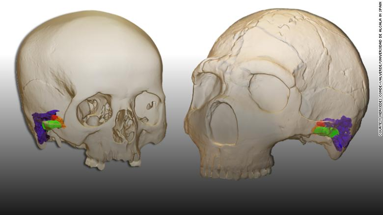 Neanderthals could hear and make the same sounds as humans, new research suggests