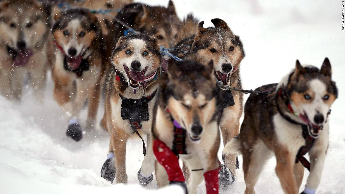 The legendary Iditarod sled dog race is going ahead amid the coronavirus pandemic
