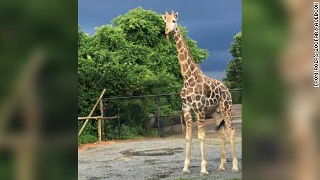 Waffles the giraffe died in a fire at a Virginia zoo Monday.