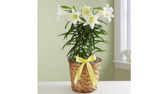 Easter Sentiment Lily Plant
