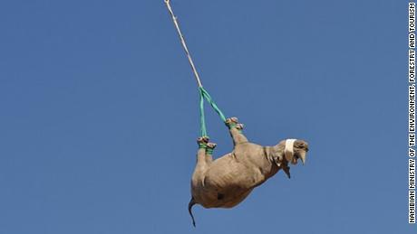 Pourquoi le transport aérien de rhinocéros à l'envers est essentiel à la conservation