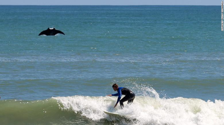 A giant manta ray jumped out of the ocean and photobombed a surfer in Florida