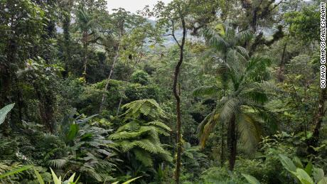 The Atlantic Forest is one of the most biodiverse places in the world, with more than 20,000 plant species.