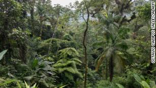 A Mata Atlântica é um dos locais de maior biodiversidade do mundo, com mais de 20.000 espécies de plantas.
