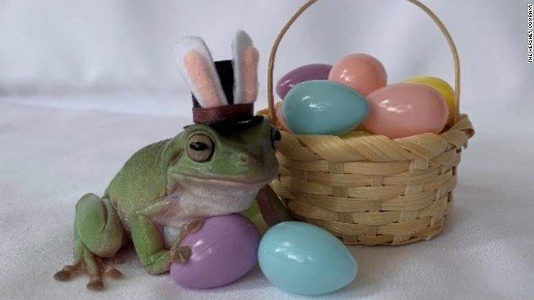 A tree frog named Betty is this year's Cadbury Easter Bunny mascot