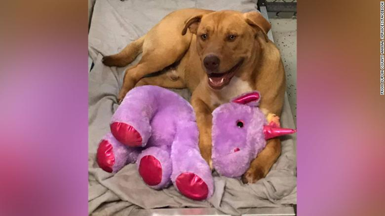A stray dog kept stealing a stuffed unicorn from a Dollar General, so animal control bought it for him