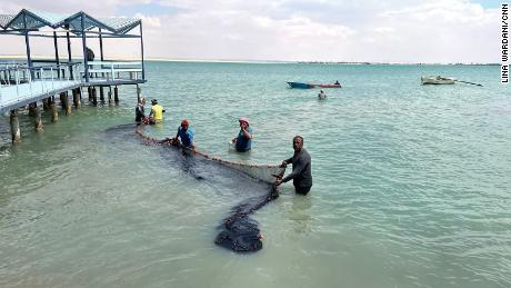 Reda El Sayed and his fellow fishermen spread a net in the bitter lakes between Ismailia and Suez.