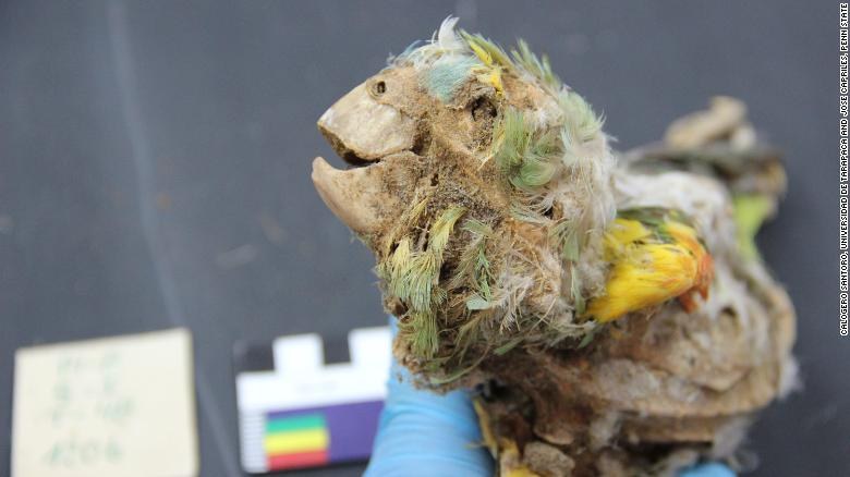 These ancient Americans mummified parrots. No one knows why