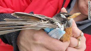 Covid-19 PPE litter is killing wildlife