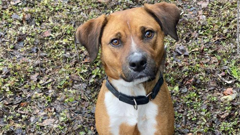 Meet Rusty. He has spent half of his dog life in an animal shelter