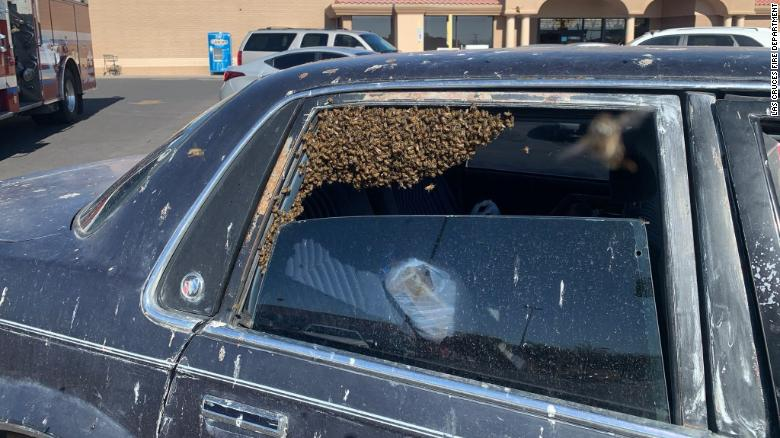 A man returned from shopping and found 15,000 bees in his car 210401150515-01-firefighter-saves-bee-swarm-exlarge-169
