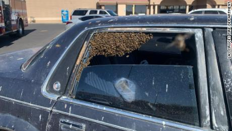 The bees entered the car when the man was in a grocery store.