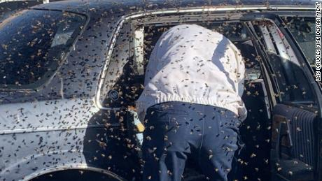The Las Cruces Fire Department estimates more than 15,000 bees were in the swarm.