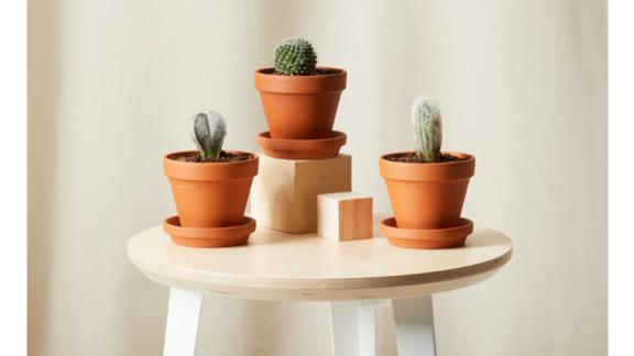 Bloomscape's Sonoran Cacti Collection