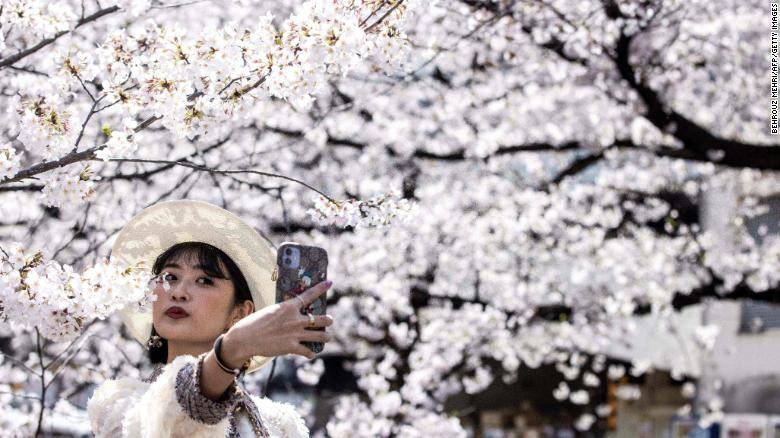 Japan just recorded its earliest cherry blossom bloom in 1,200 years as impact of climate crisis intensifies