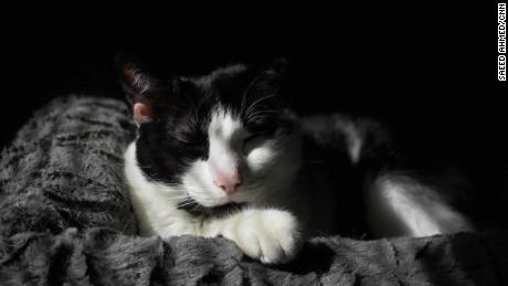 Humans need pets as much as pets need humans, experts say. Patches agrees.