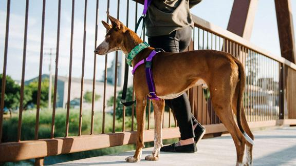 2 Hounds Design Freedom No-Pull Harness