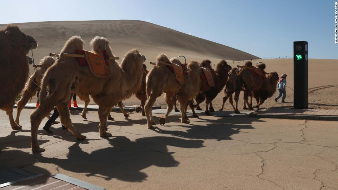 China creates world's first traffic signal for camels
