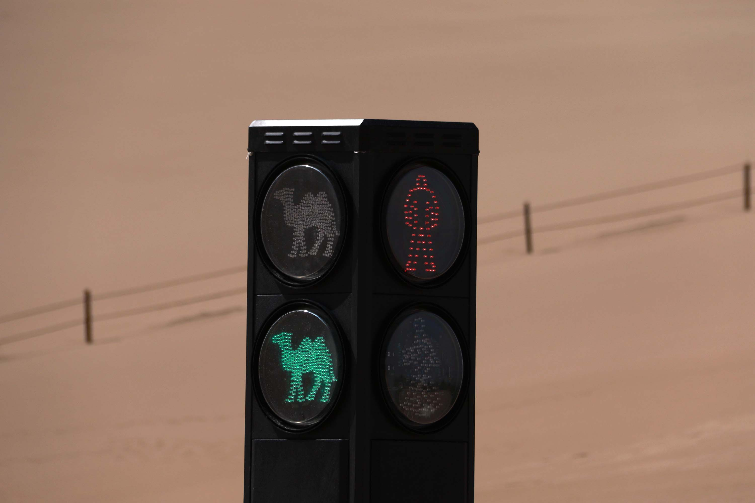 Camels get their own traffic signal in China | CNN Travel