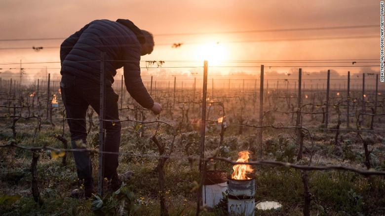 A man checks vine buds as anti-frost candles burn in the Luneau-Papin vineyard near Nantes on April 12.