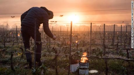 French winemakers face devastation after worst weather conditions in 30 years